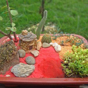Sertão - Mini Jardim